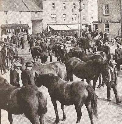HorseMarket